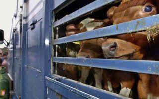 Несколько советов по правильной транспортировке животных в автотранспорте